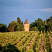 | Summer Time 🌞 ||  Pouvoir passer un week-end en famille ou entre amis avec un peu de soleil 🙌🏼  N'hésitez pas à passer nous voir et vous balader dans nos vignes du mardi au samedi 😉  📷 @bennie.std   #chateaulaballe #armagnacisback #armagnac #armagnaclaballe #laballe #eaudevie #resistance #exode #moments #ugniblanc #baco #folle #spirits #parleboscq #wine #winelovers #gascogne #gascon #vigne #vine #vineyard #history #story #leslandes #landes #basarmagnac