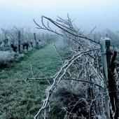 ❄️ WINTER IS BACK ❄️ . Les matins au @laballe_chateau sont frais, sont magnifiques presque mystiques !  Ok, ils sont surtout frais !! 🥶 . Mornings @laballe_chateau are cold, wonderful, almost mystics ! All right, they are mostly cold !! 🥶 . #coldday #winter  .  #chateaulaballe #armagnacisback #armagnac #armagnaclaballe #laballe #eaudevie #resistance #moments #ugniblanc #baco #folle #spirits #2020 #newyear #break #parleboscq #wine #winelovers