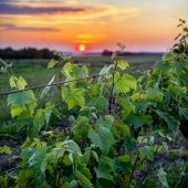 | COULEURS ESTIVALES || 🌅 | . Ça y est, c'est officiellement l'été depuis hier! 🤞🏻 pour qu'on puisse en profiter naturellement et librement. 🎼 . Summer is official sine yesterday! Hope we will be able to enjoy it as always, mild mood and free! 🤞🏻 . #summer #ete #laballe #sunset #soleil #libre #nature #armagnacisback #armagnac #bewild #befree